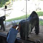 Claudio's Favorit: Nicht der Gorilla, sondern die Reaktion der asiatischen Besucherin auf den knackigen Gorilla-Hintern :-)
