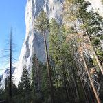 El Capitan - sehr beliebt bei den Kletterern, die 3 Tage und mehr für den Aufstieg benötigen.