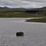 """""""One Moose"""" im """"Two Moose Lake"""""""