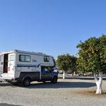 Schöner Campingplatz mit dutzenden von Orangenbäumchen.