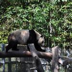Sogar Pandabären sind dort zu Hause.