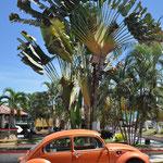 Wir freuen uns über die VW Käfer, welche immer wieder mal das Strassenbild von Mexiko prägen.