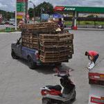 Hühner-Verkauf, direkt auf dem Parkplatz einer Tankstelle. Selbstverständlich frisch, die Hühner sind noch am leben.