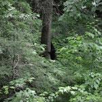 Wer ganz genau hinsieht, kann hier Bären erkennen.
