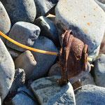 ... und weiteres Strandgut. Hier der Rest einer verrosteten Spraydose.