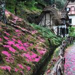 Blumenpracht in Queimadas