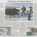 2017 02 08 Galloways im Grünen Band