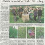2017 07 13 Lebende Rasenmäher für den Dürrenberg