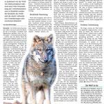 2018 06 02 Die Angst vorm 'bösen Wolf'