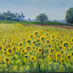 Sonnenblumen  40 x 60 Öl