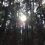 奥の院の林道