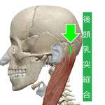 後頭乳突縫合