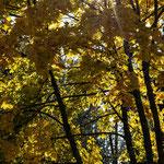 """Stausee Ottenstein/NÖ-Seeweg, 11.10.2019 -""""NÖ Sieger 9 Schätze"""""""