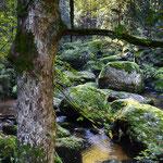 Naturdenkmal Schütt bei Grünbach-Rapottenstein/NÖ, 11.10.2019