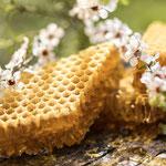 Miel et Fleurs de Manuka