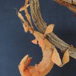 das Universum der Insekten: australische Gespenstschrecke