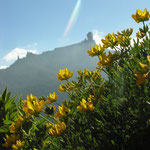 Fels- und Blumenlandschaften auf Gran Canaria