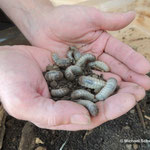 Wunder der Verwandlung: Wie entwickeln sich Insekten?
