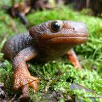 Damals im Karbon: die Zeit der Insekten, Farne und Amphibien