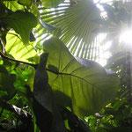 Botanische Gärten - Paradiese aus Menschenhand