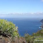 Einzigartige Pflanzenwelt auf La Gomera (Kanarische Inseln)