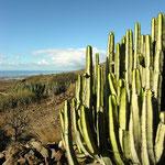 Sukkulenten-Wüste auf Gran Canaria mit Kanaren-Wolfsmilch