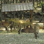 Centro visita Lupi (PE)