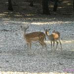Fauna del Parco Nazionele della Majella