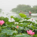 霧中の漁場へ 北印旛沼 7月 梅川記生