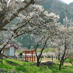 春の訪れ   長野県千曲市   4月    小野 喜作