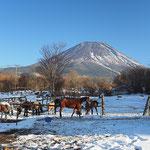 富士とお馬さん  富士が峯 1月  梅川記生