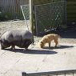 Schweinchen unter sich
