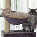 Barnabas und Camillo
