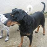Kasja von Aktiv für Hunde in Not