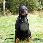 Rambo aus dem Tierheim Bielefeld