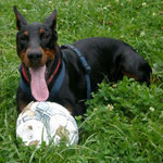 Henry aus dem Tierheim Biberach