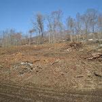 ①山で木を切った後には、多くの残材が残されています。