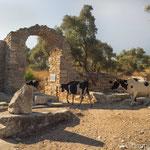 Agorà III millennio a.C. - IV secolo a.C