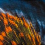 10) Fiori arancioni…Mare blu   70x46  (contattare per la vendita)