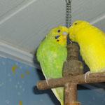 Links von Citro sitzt Lemon. Die beiden wurden Freunde, aber leider dauerte diese Freundschaft nicht lange. Beide starben kurz hintereinander an unterschiedlichen Dingen.