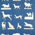 Studie von Hunden