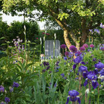 Gartenliegestuhl hinter blühendem Zierlauch und Iris