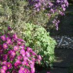 Herbastern vor einem Gartenwegpflaster und Mosaik
