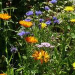 Kornblumen und ringelblumen