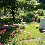 Blick von Terrasse im Kleingarten Juni 2013 mit bunten Margeriten und Spornblumen im Fordergrund