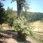Auf der Laufkoppel können sich die Pferde austoben - auch außerhalb der Weidezeit.