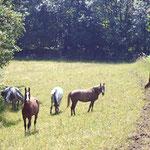 Jedes Jahr kommen die Pferde auf eine andere Graskoppel.