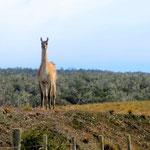 day-624 // Tierra del Fuego, Argentina - 18.02.2015 (km 24'731)