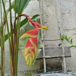 fleurs exotiques / exotic flowers