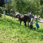 Die Pferde werden von der Weide geholt